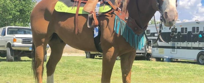 Best Ever kids saddle